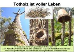 Gartenkultur13_Totholz-1_klein.jpg