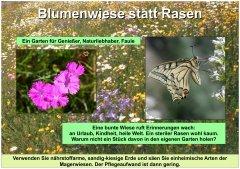 Gartenkultur16_Blumenwiese_klein.jpg