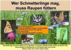 Gartenkultur6_Schmetterlinge_klein.jpg